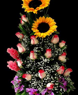 Imagen49 1 300x366 Tienda