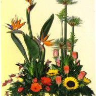 Jardinera en aves del paraiso gerberas anturios girasol rosas y papiros. 135.000 155.000 175.000 190x190 Tienda