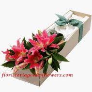 Lilies oriental pink chocolates 190x190 Tienda
