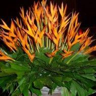 Opalos y hojas mariposa. 180.000 230.000 280.000 190x190 Tienda