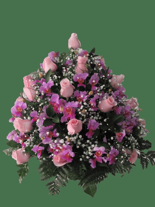 Rosas 17