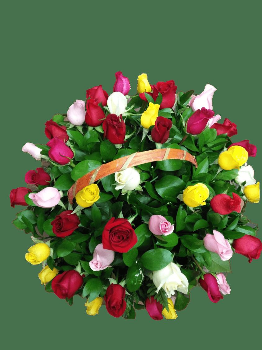 Rosas 18