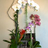 Baul orquidea 125000 155000 185000 190x190 Tienda