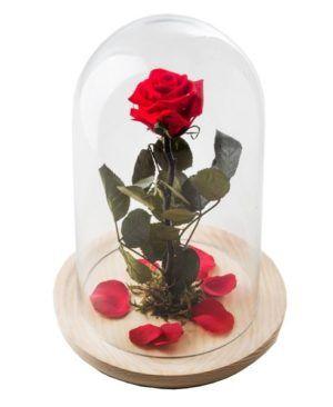Rosa roja 1 300x366 Tienda
