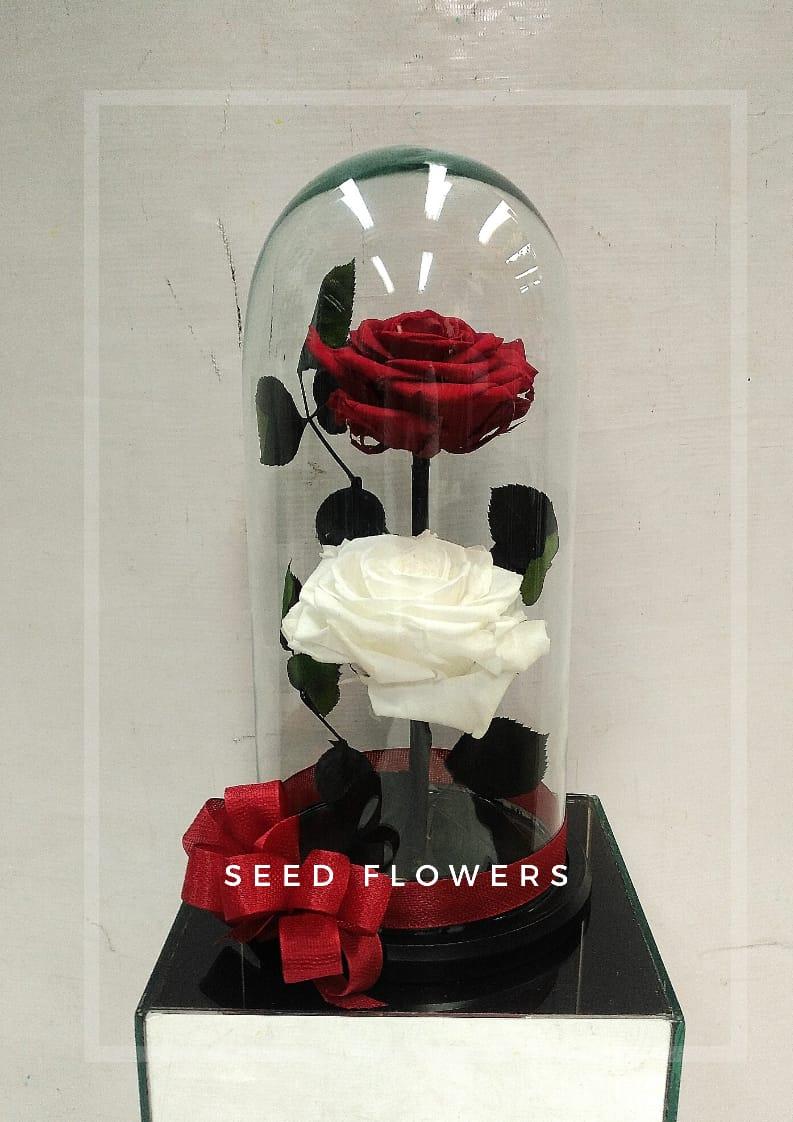 Rosas Preservadas X 2